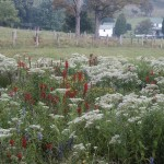 fall_wildflowers
