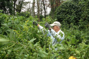 Autumn 2015 Volunteer Day