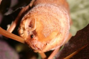 Fall for Bats – Sat., Nov. 18