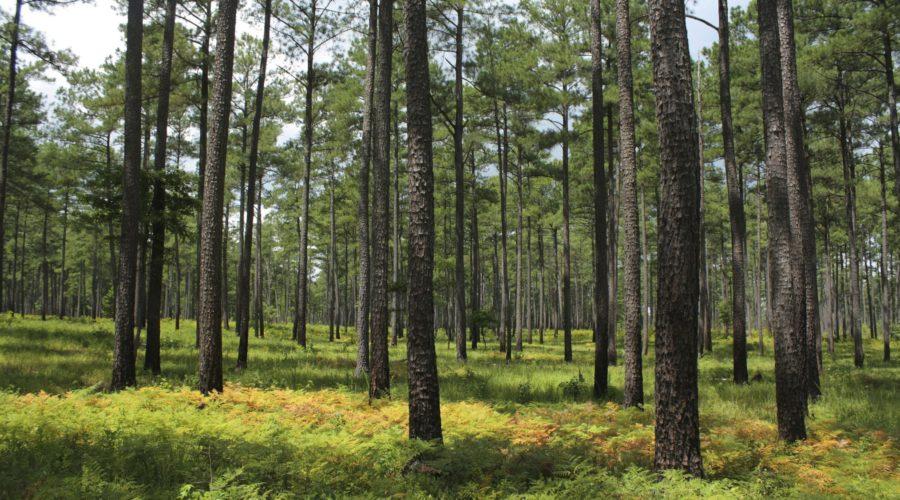 Piney Grove Nature Preserve